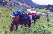 Pack Horses on a Trek - Photo provided by Himalayan Adventures, Manali
